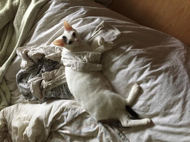 lois - Loïs - chatte blanche et noire - née en mai 2016 Img_8219
