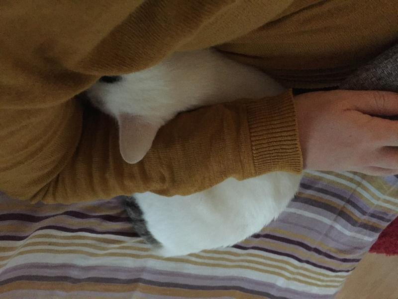 lois - Loïs - chatte blanche et noire - née en mai 2016 Img_8310