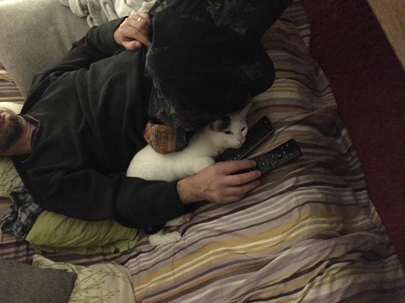 lois - Loïs - chatte blanche et noire - née en mai 2016 Img_8513