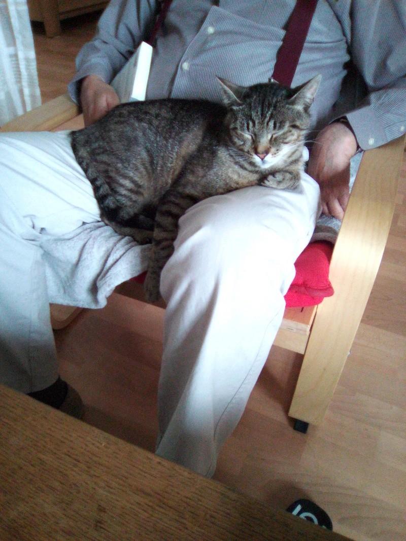 Léto, gentil chat mâle type européen, tigré, né en juin 2015 Img_2014