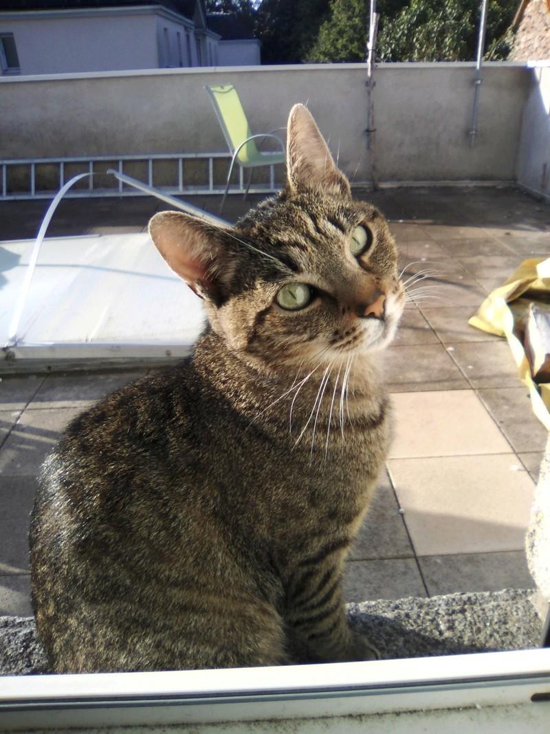 Léto, gentil chat mâle type européen, tigré, né en juin 2015 Img_2033