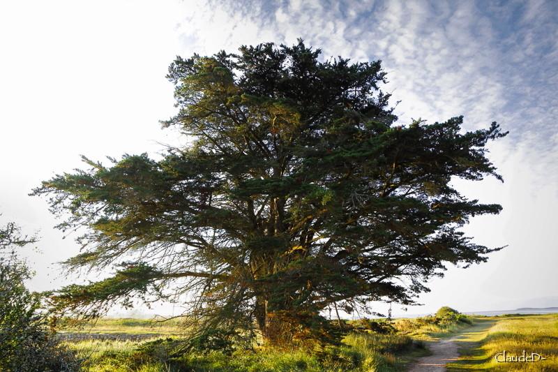 Auprès de mon arbre  Cypbre11