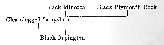 Куры породы Орпингтон - Страница 10 Image118