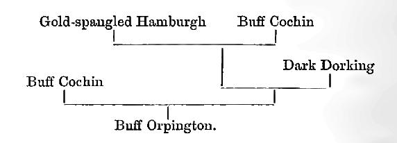 Куры породы Орпингтон - Страница 10 Image119
