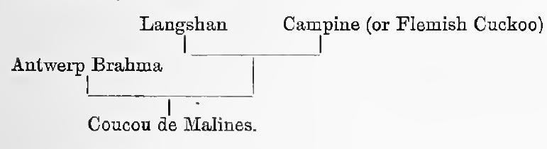 Мехеленская кукушка - Страница 16 Image141