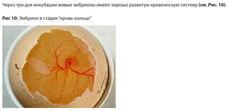 Анализ проблем выводимости яиц - Страница 5 Image173