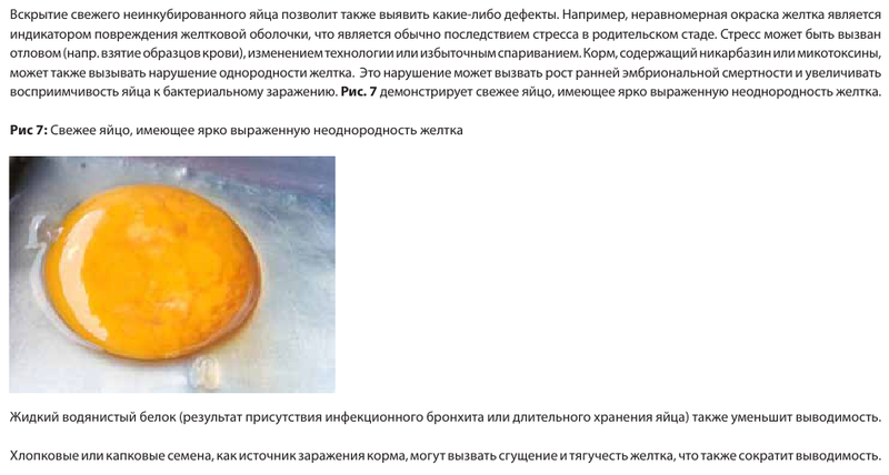 Анализ проблем выводимости яиц - Страница 5 Image174