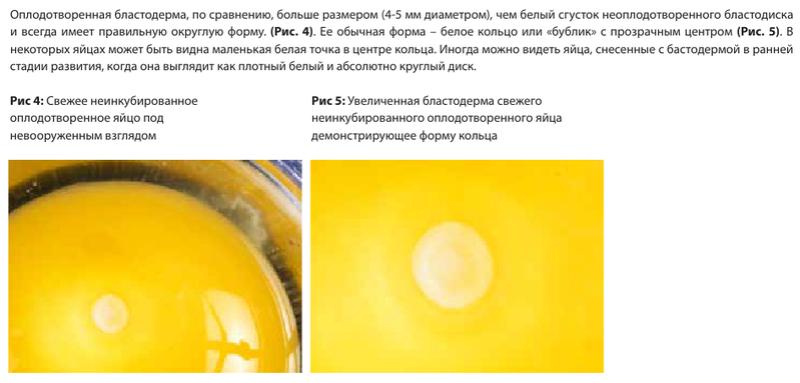 Анализ проблем выводимости яиц - Страница 5 Image175