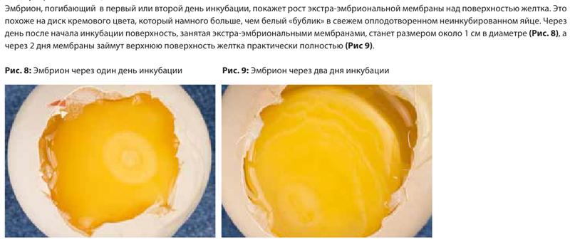 Анализ проблем выводимости яиц - Страница 5 Image176