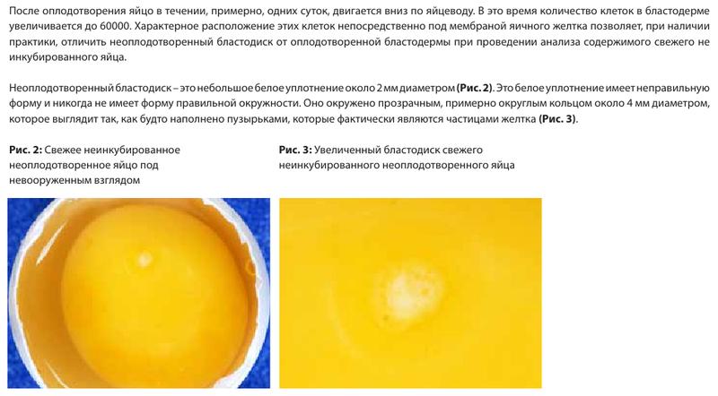 Анализ проблем выводимости яиц - Страница 5 Image177