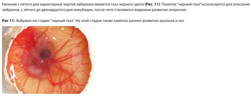 Анализ проблем выводимости яиц - Страница 5 Image178