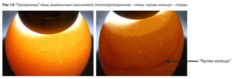 Анализ проблем выводимости яиц - Страница 5 Image182