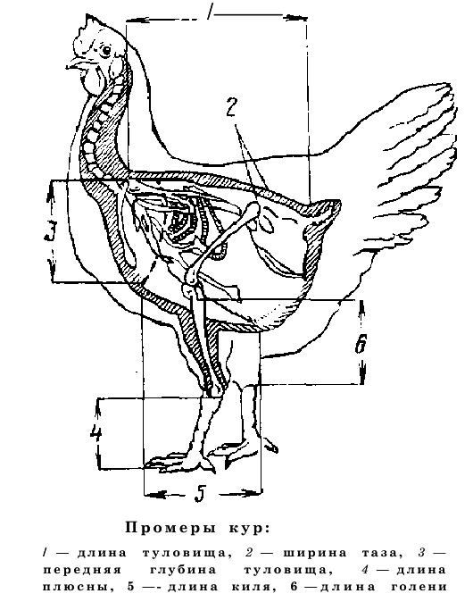 Селекция птиц - Страница 2 Image220
