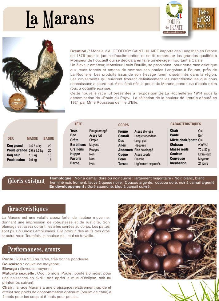 Мараны - порода кур, несущие пасхальные яйца - Страница 13 Image510