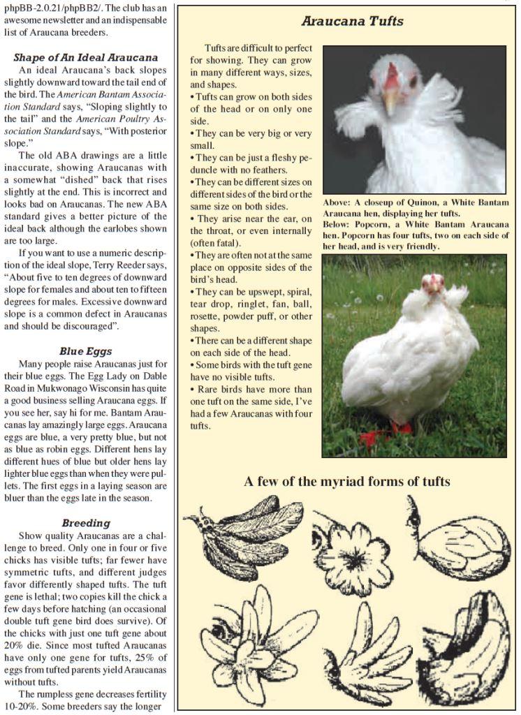 Амераукана, Ameraucana / Easter Egger Image515