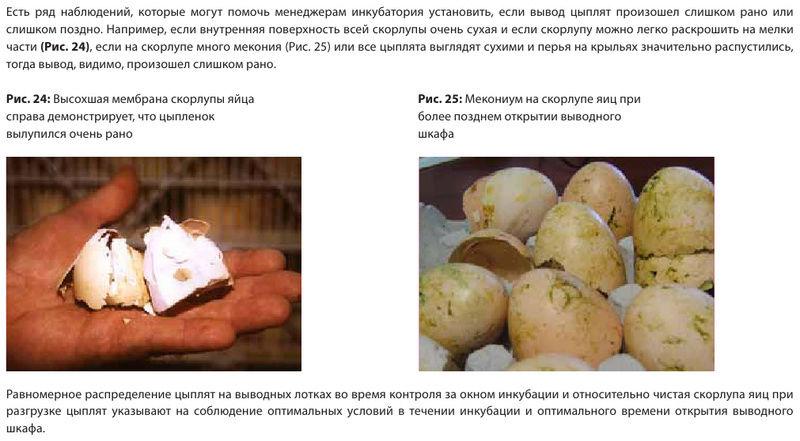 Анализ проблем выводимости яиц - Страница 5 Image556