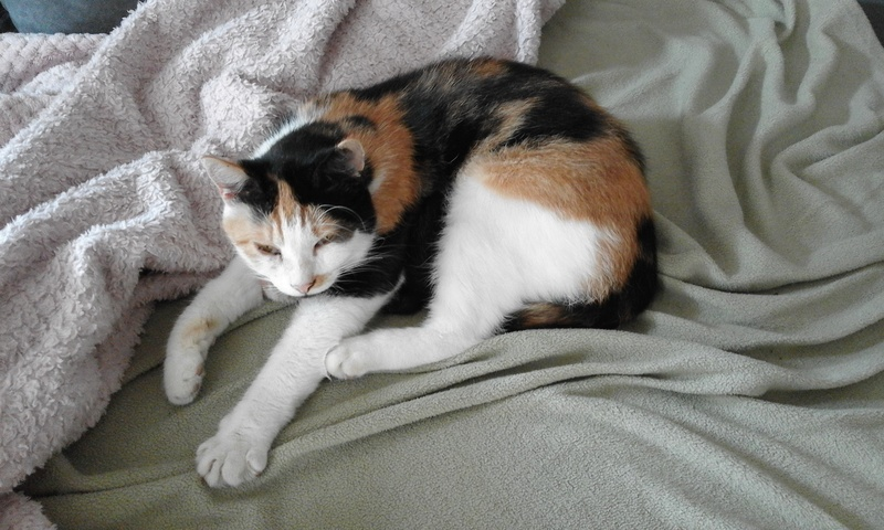 PHIBIE, née en juin 2015 20170813