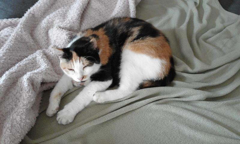PHIBIE, née en juin 2015 20170814