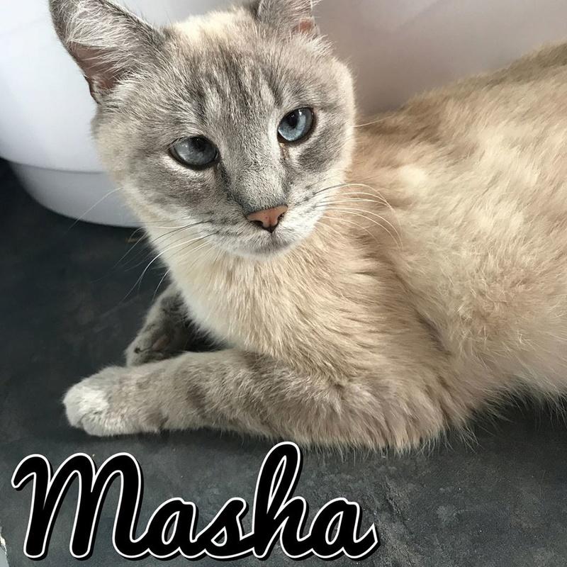 Masha, née le 1er janvier 2014 20375710