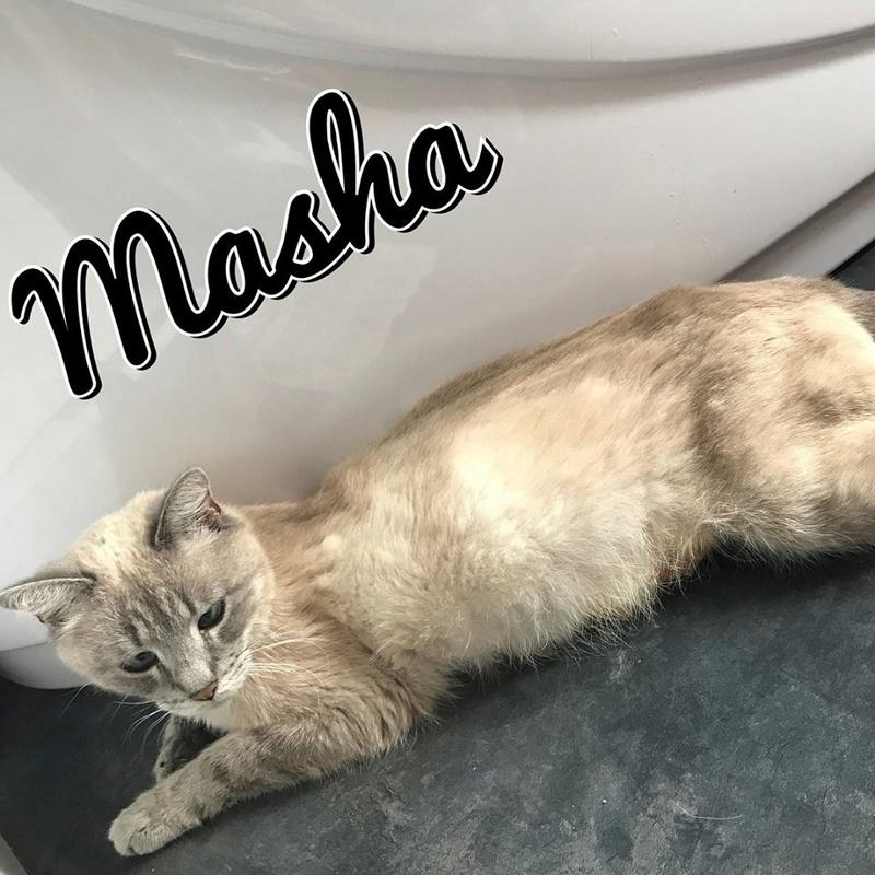 Masha, née le 1er janvier 2014 20376010