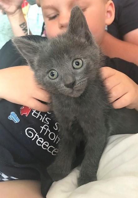 Luna, femelle grise type européen, Née le 1er Mai 2017 Img_9910