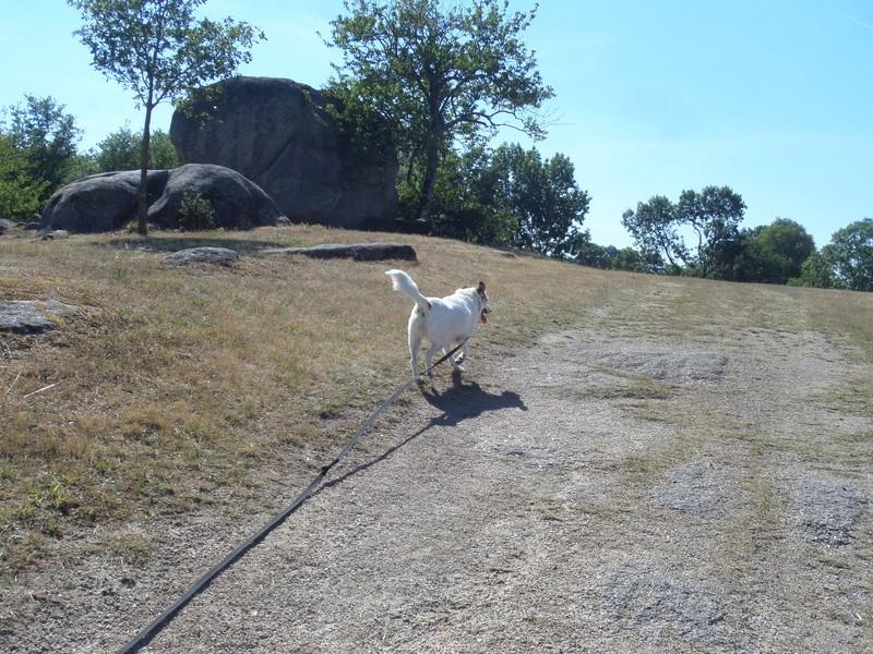 FATA, née le 12/06/2009, arrivée chiot au refuge (soeur de Mickey et fille de Tara) - en FA dans le 49 - GARANT - SOS -R-FB-SC-30MA - Page 11 Sam_3612