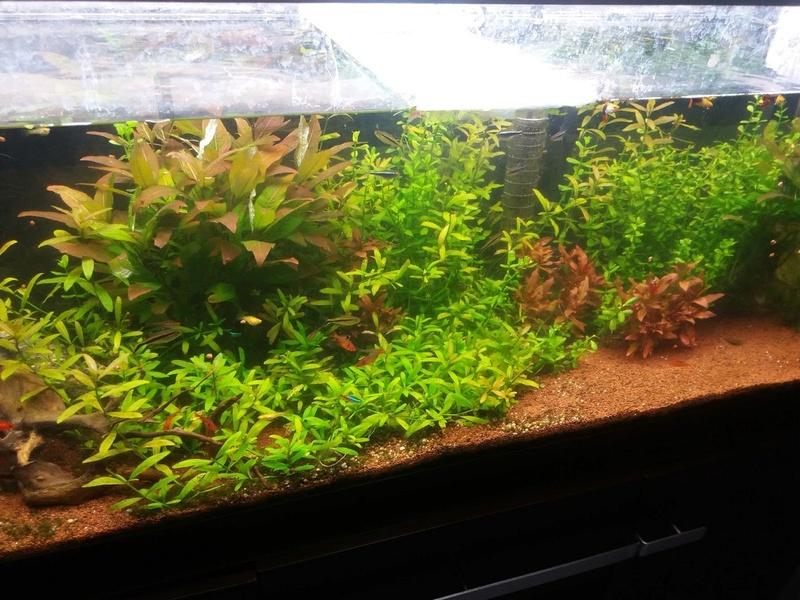 Probleme d'algues pour changer 20170510