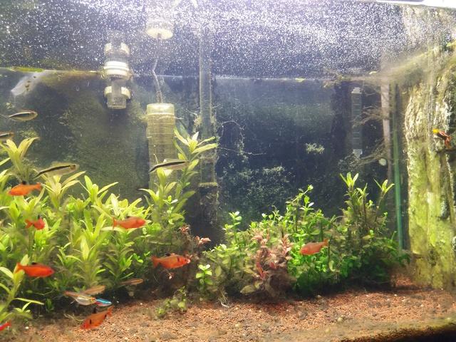Probleme d'algues pour changer 20171014