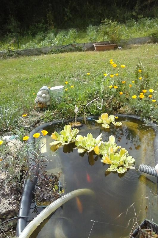 Mon bassin de jardin - Page 9 20170710