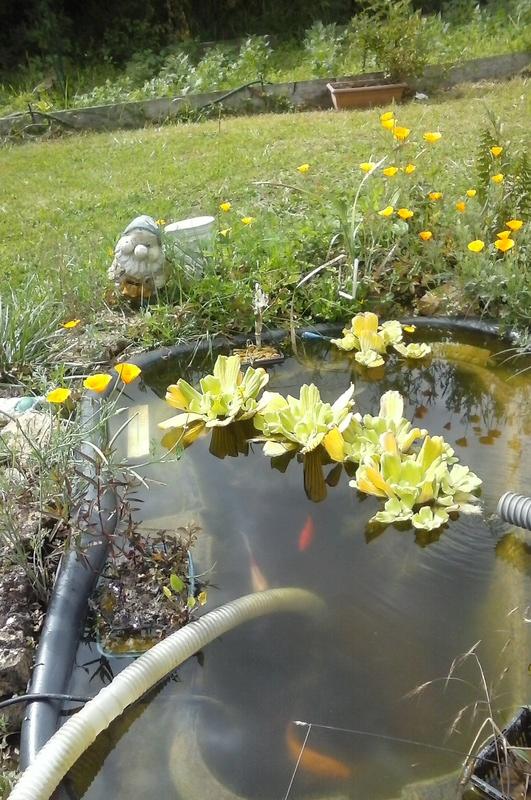 Mon bassin de jardin - Page 9 20170711