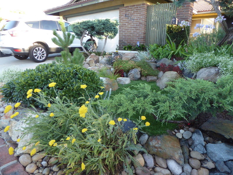 Jimmy's (home of Kohdi and Mishka) Gardening Projects - Page 7 01010