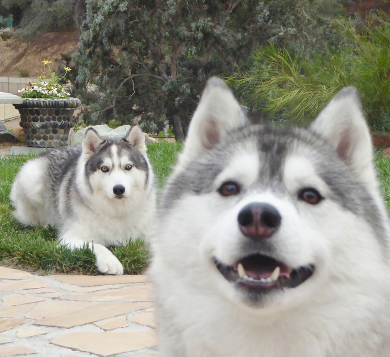 "Mishka's (Kohdi's lil ""sister"") scrapbook Image131"