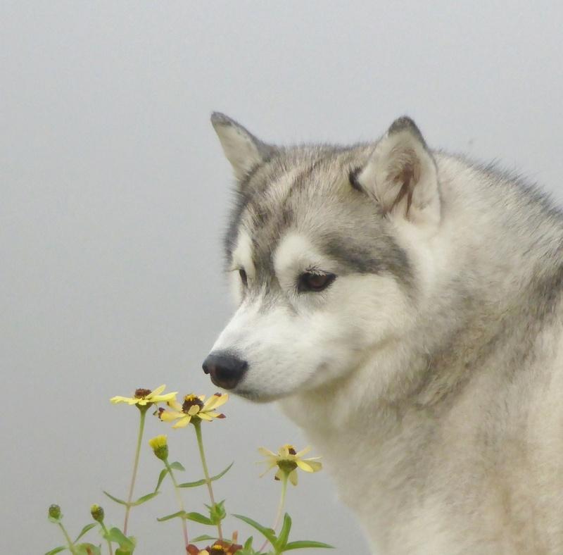 "Mishka's (Kohdi's lil ""sister"") scrapbook Image137"