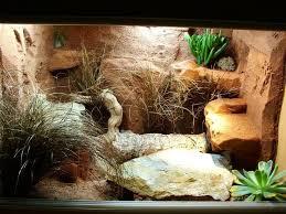Mon terrarium en OSB Images10