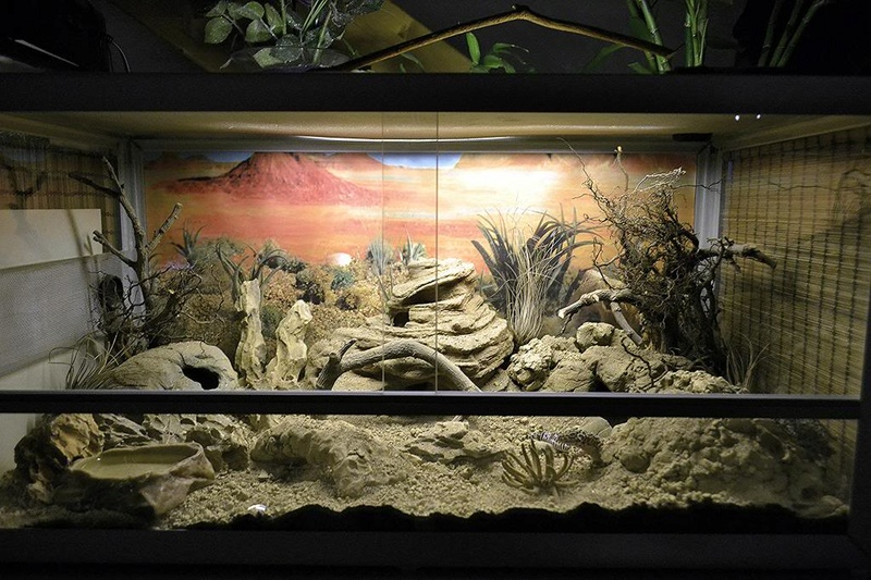 Mon terrarium en OSB Post-310
