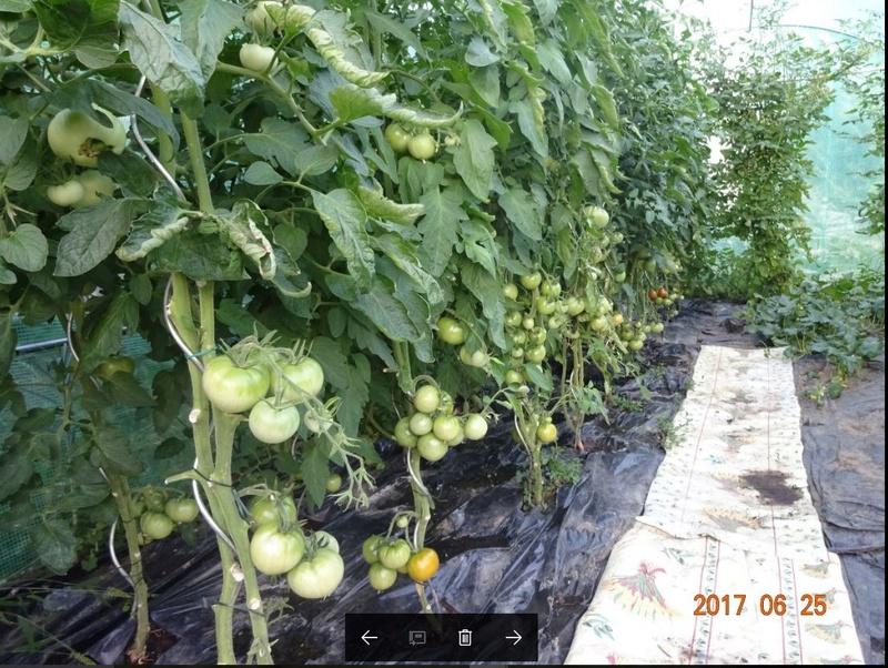 Mon jardin potager Captur11