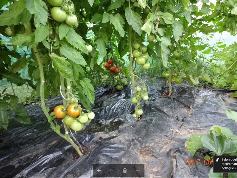 Mon jardin potager Captur12