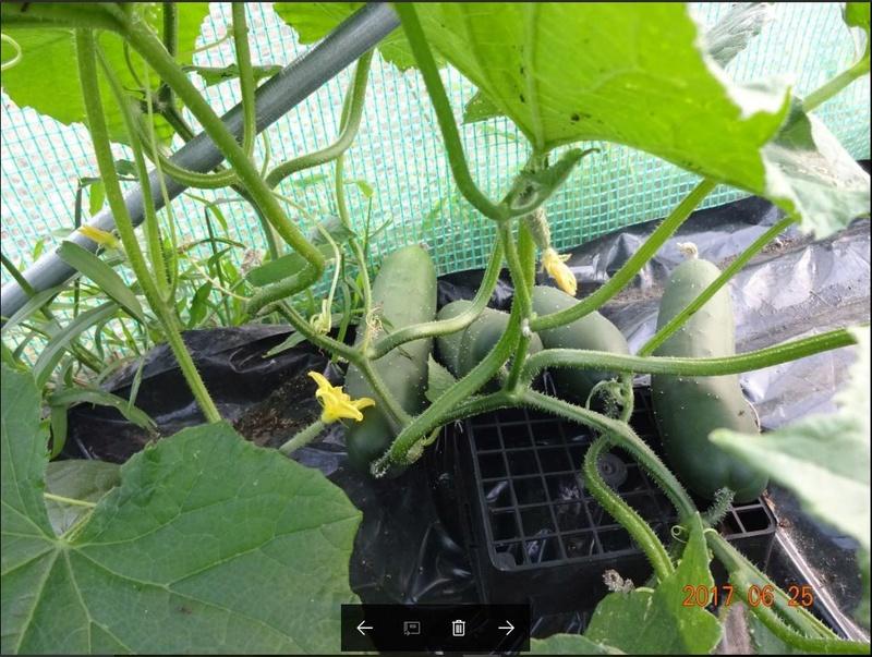 Mon jardin potager Captur13