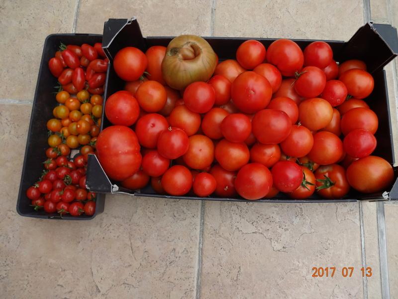 Mon jardin potager - Page 2 Dsc00511