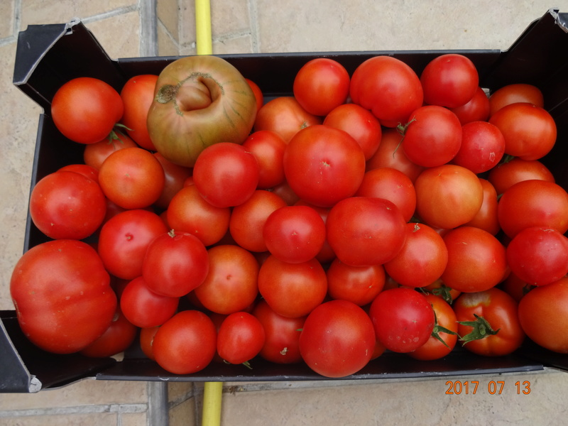 Mon jardin potager - Page 2 Dsc00512
