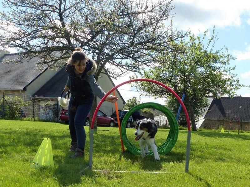 Superdog - Agility & Loisirs canins 18671110