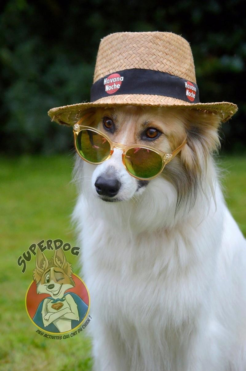 Superdog - Agility & Loisirs canins 20819410