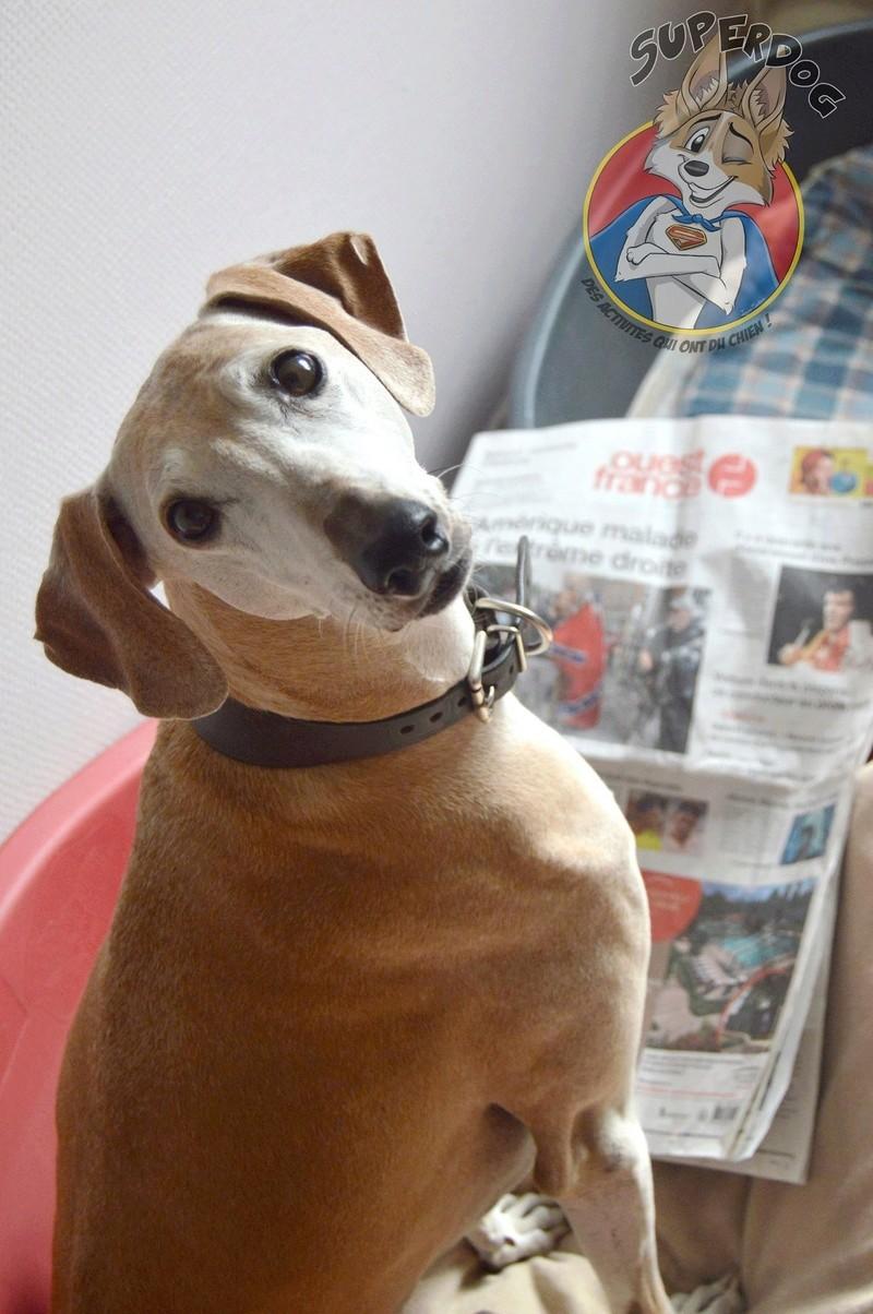 Superdog - Agility & Loisirs canins 20901710