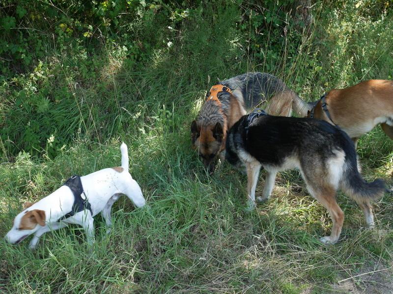 Education du chien de compagnie.fr - Page 2 P1040117