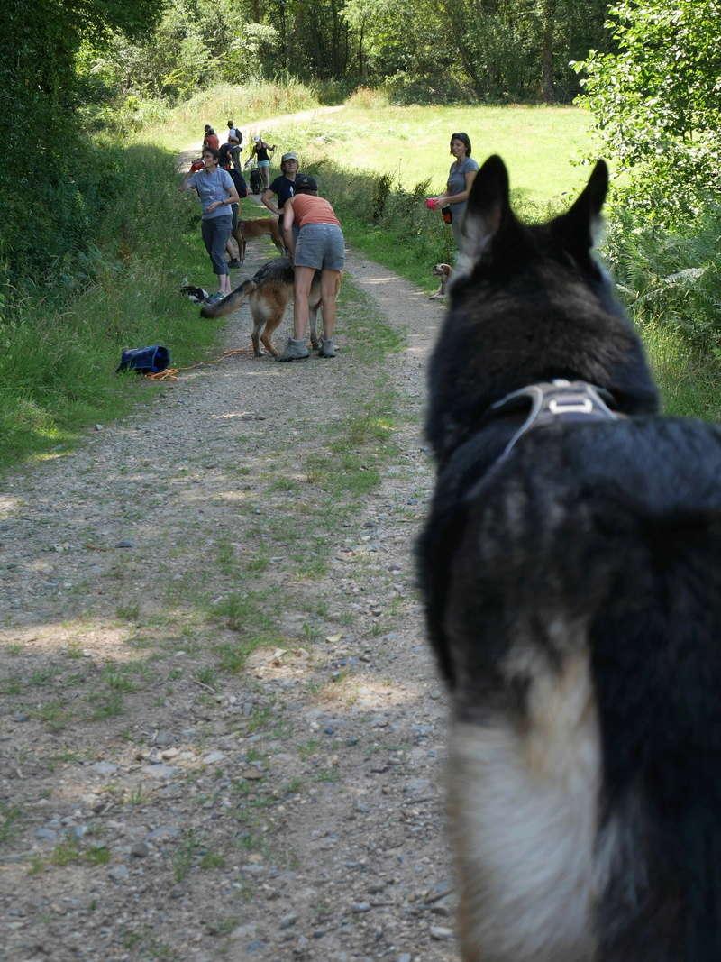 Education du chien de compagnie.fr - Page 2 P1040120