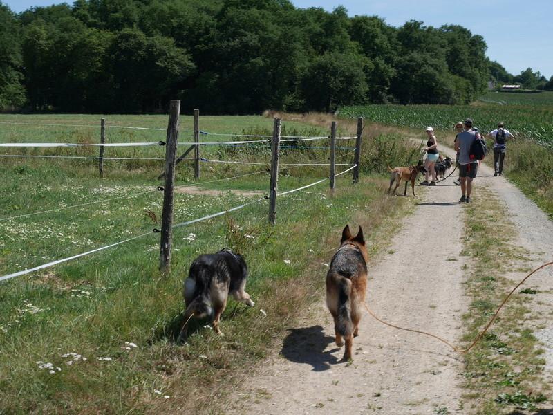 Education du chien de compagnie.fr - Page 2 P1040121