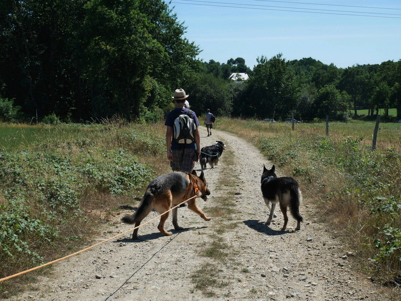 Education du chien de compagnie.fr - Page 2 P1040122