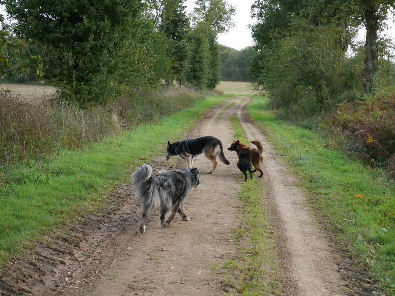 Lire la queue du chien P1040614