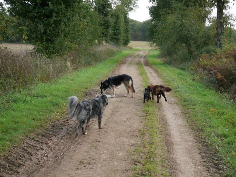 Lire la queue du chien P1040615