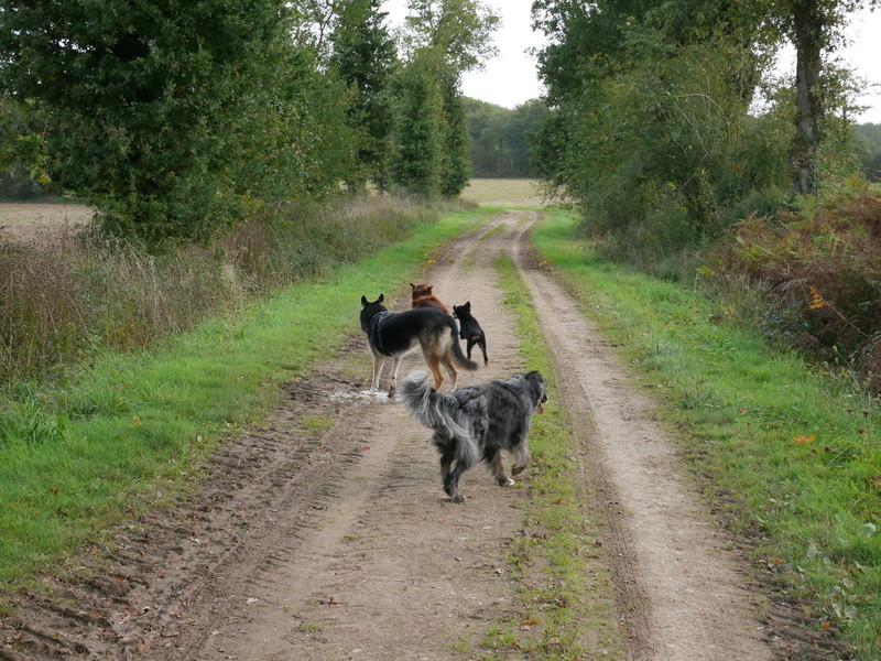Lire la queue du chien P1040616